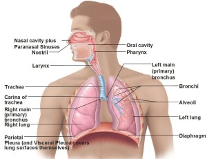 cardiopulmonary diseases