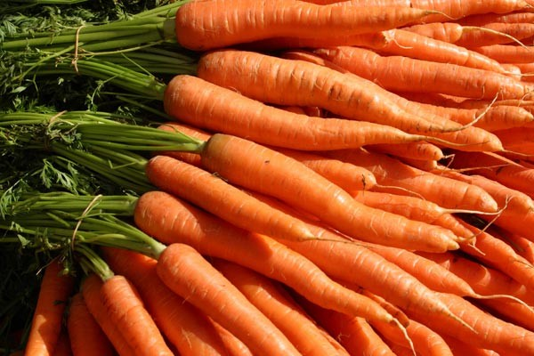 Carrots diet