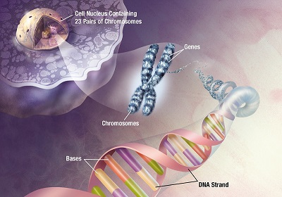 Genetic testing for Alzheimer's disease risk assessment